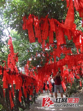 """红布条形成的""""红树林"""",已成为天门山景区的一道亮丽风景"""