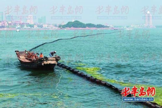 9日下午2时许,八大峡附近海域,工作人员将浒苔拦截网拖放到小青岛到中苑码头之间海域。
