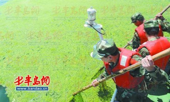 6月14日,青岛边检站干警在胶州湾巡逻艇上打捞浒苔。目前岛城已做好浒苔应急处理准备。