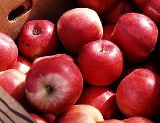 5、苹果(苹果食品)热量56千卡/100克
