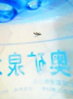 桶装水里有虫子
