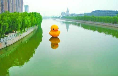 """6月30日,济南版""""小黄鸭""""现身小清河历山北路河段。 见习记者高歌"""