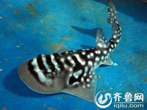 海底世界动物资料