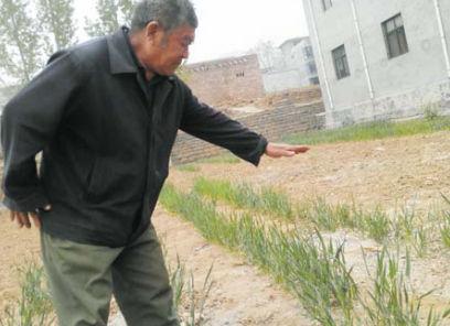 去年这时,麦子已经到林燕喜手比着的高度了。