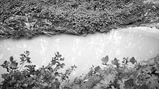 8日,在济南市西卢村西侧的巨野河,河道内流着黄色的河水。 本报记者 蒋龙龙 摄