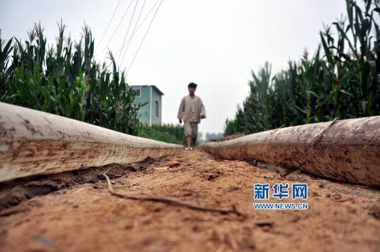 8月13日,山东省聊城市茌平县贾寨镇的农民在给玉米浇水抗旱。新华社发(赵玉国 摄)