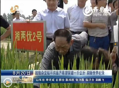 中国工程院院士、水稻专家袁隆平今天到日照莒县的超级稻高产攻关基地做现场指导