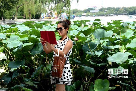 8月26日,游客在济南大明湖畔荷花丛前自拍。 新华社记者冯杰摄