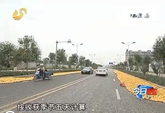 可以解决粮食晾晒问题的烘干机在山东并不普及,村民大多还是选择在公路上晾晒(视频截图)