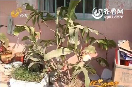 花枝掩映之间,还有几个怯生生的花苞们正羞涩的等待合适的时机绽放。(视频截图)