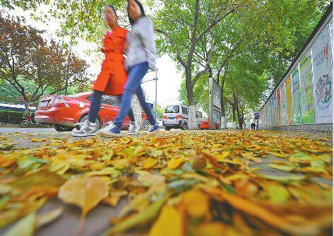 12日,满地的黄叶让人感到深秋的寒意。 记者郭尧 摄