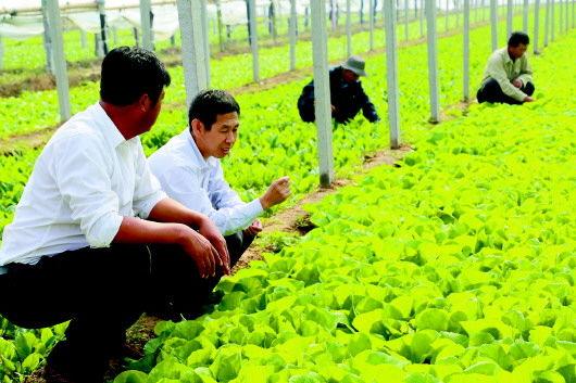 """山东省垦利县的""""第一书记""""在了解村民大棚蔬菜长势。"""