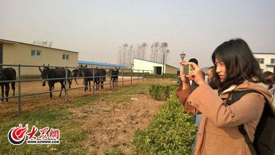 """28日上午,聚焦""""一圈一带""""第十届中国网络媒体山东行采访团记者们来到位于东阿县的国家级黑毛驴繁育中心,采访团的""""旅友""""与""""驴友""""们进行亲密接触。和毛驴赶紧合个影。"""