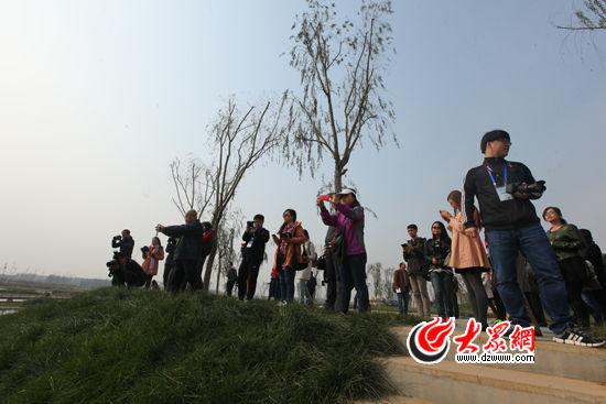 采访团在夏津九龙口湿地采访