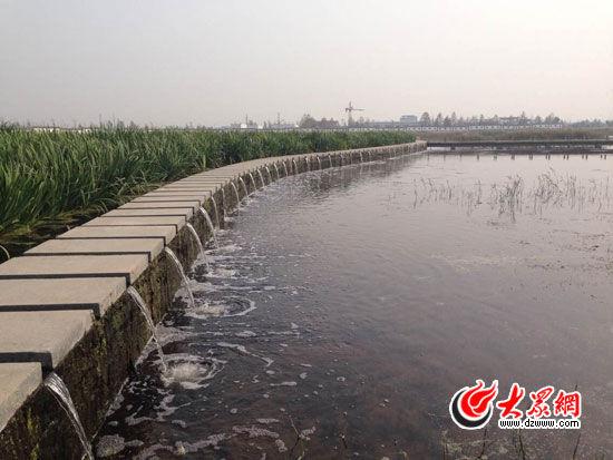 夏津九龙口湿地把净化处理后的污水用作生态用水,实现水资源循环利用