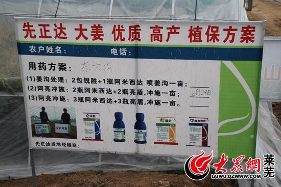无公害生姜生产基地,对于种植用药实行统一指导(记者 亓秀宝 摄)
