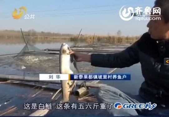 养殖户告诉记者,这种死鱼的眼睛很特别。