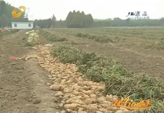 40万斤地瓜滞销求卖。