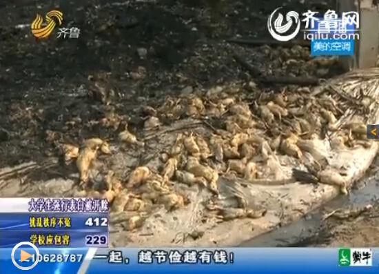 遍地都是被烧糊的鸭子。(视频截图)