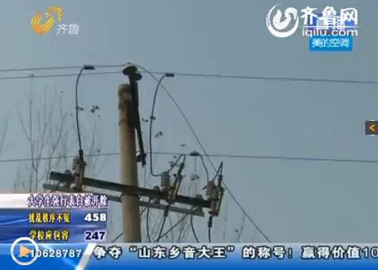 鸭棚旁边电线杆上的一根电线断落。(视频截图)