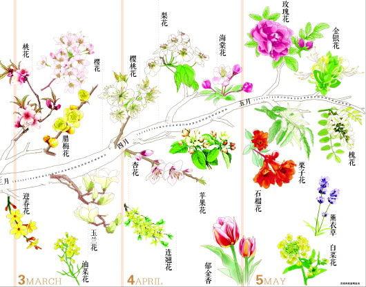 济南市旅游局在去年按鲜花地理分布整理发布春季赏花地图的基础上,今年又推出了春季赏花指南:花的期约手绘图。这一指南按照花期顺序整理绘制,以时间节点制作成花的月历,便于外出踏青的游客结合花期寻花赏花。   按照指南,三月中旬开始,梅花、桃花、迎春花、樱花、樱桃花、玉兰花、油菜花相继进入赏花期。游客可按提示寻找自己心仪的赏花地点,赴一场春的约会。   迎春花   赏花期:三月中下旬至五月中上旬   赏花地:三王峪山水风景园(三月中下旬)、水帘峡风景区(四月份)、九顶塔中华民俗欢乐园(四月至五