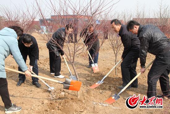 植树的一般步骤和方法