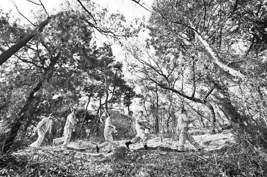 邹城市五宝庵山林场,几位护林员守护着林场安全 □CFP供图