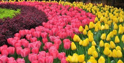 五种春天开的花朵