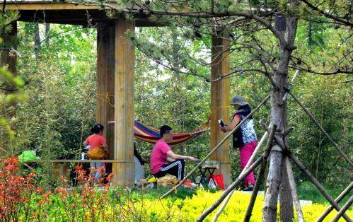 黄河路绿化带内一家人在景观亭内烧烤.