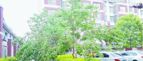 幼儿园手工制作桑树