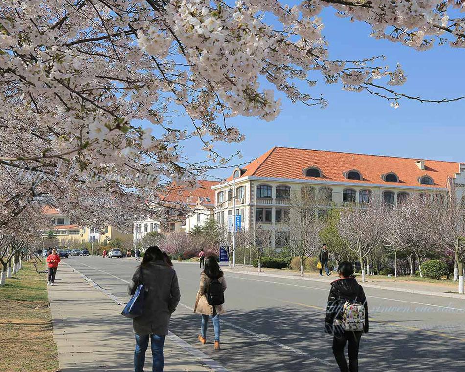 校园春色之那些花儿
