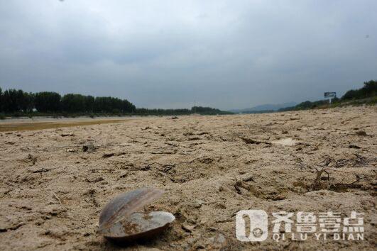 烟台干旱少雨露河床 全民都去挖蛤了