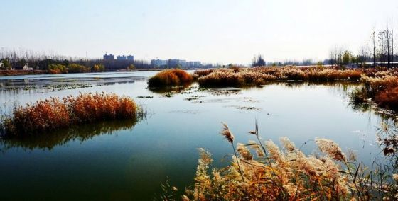 菏泽市的成武东鱼河湿地公园,郓城宋金河湿地公园位列其中.图片