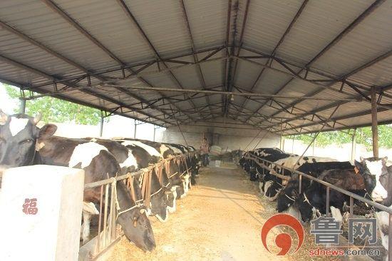 农村小型牛场设计图