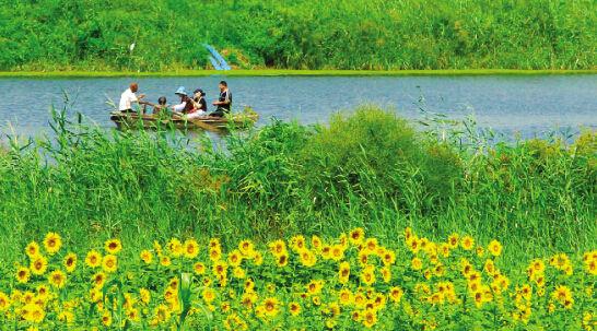 美丽徒骇河油葵次第开 滨北打造沿河生态观光旅游区