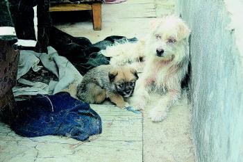 泰山小动物保护基地屡次有人偷狗