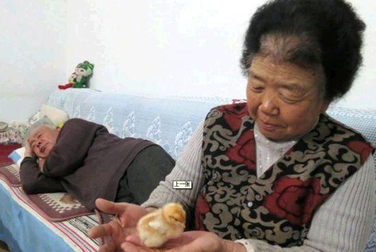 市民用灯泡孵小鸡