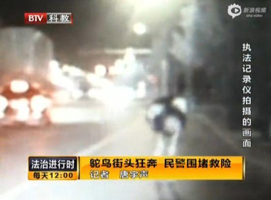 实拍北京街头一鸵鸟狂奔 民警紧跟围堵